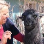 Thunderbird Lodge Retreat Owner Lori Portillo with her pet llama, Jewel. (Photo courtesy of Thunderbird Lodge Retreat/Angela Barker)
